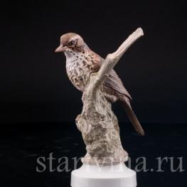 Фарфорвая статуэтка птицы Певчий дрозд, Англия,, вт. пол. 20 в.